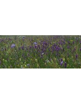 Wildflower Meadow Honey - 450g