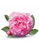Rose Petal Jam - 200g