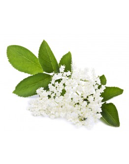 Elderflower Cordial - 500ml