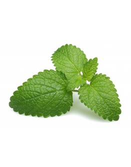 Mint & Lemonbalm Cordial - 500ml