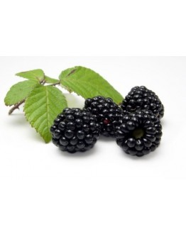Blackberry Cordial - 500ml