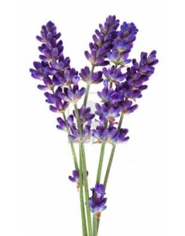 Lavender Cordial - 500ml