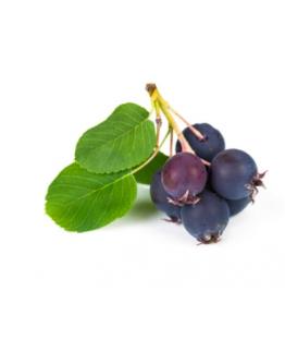 Saskatoon Berry Jam - 190g